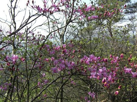 岩石山へお花の下見_e0164643_22335593.jpg
