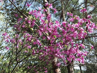 岩石山へお花の下見_e0164643_22424775.jpg