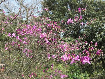 岩石山へお花の下見_e0164643_2242843.jpg