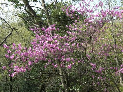 岩石山へお花の下見_e0164643_2243338.jpg