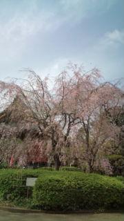 上野公園に行きましたぁ_e0114246_1582767.jpg