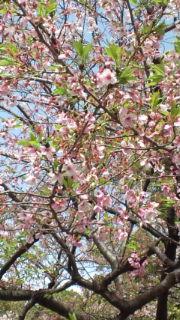 上野公園に行きましたぁ_e0114246_1582778.jpg