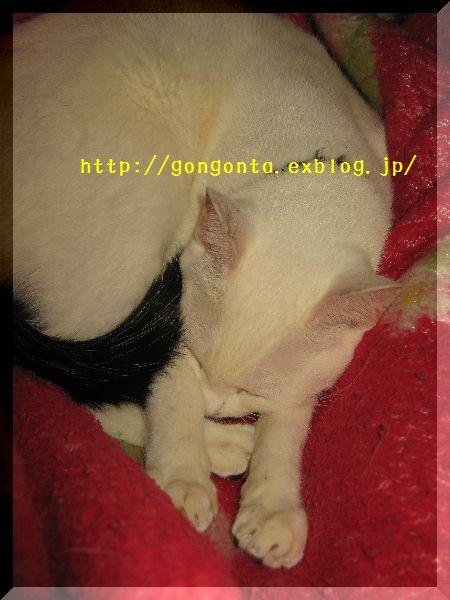 e0085147_1511461.jpg