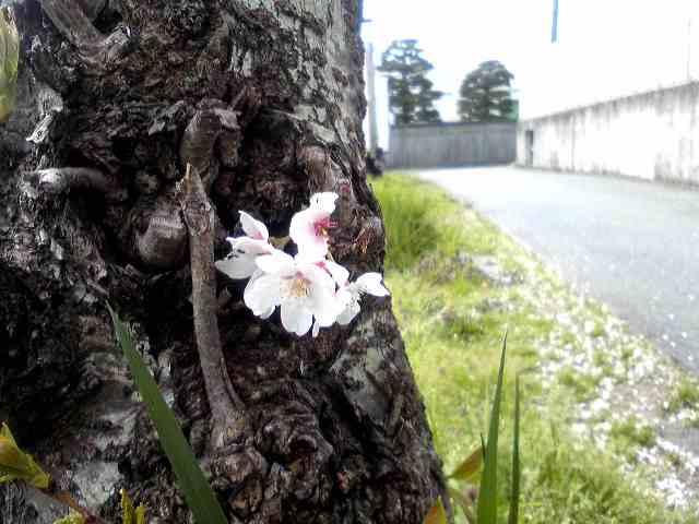 桜と喧嘩と歩行器と_d0029354_10355019.jpg