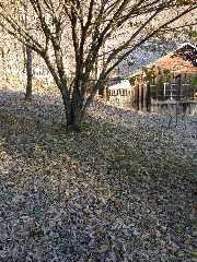 shimo1.jpg