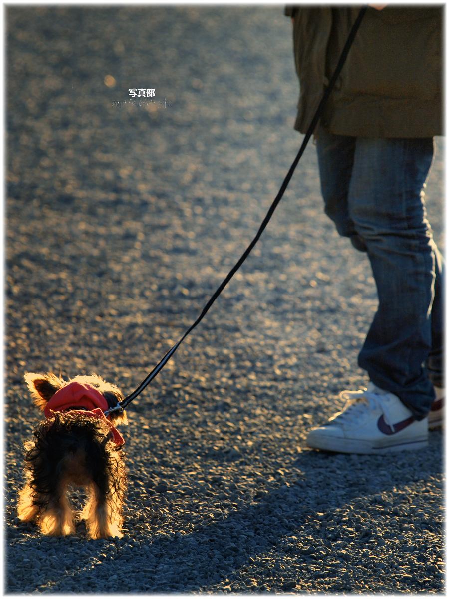犬わん_f0021869_22141491.jpg
