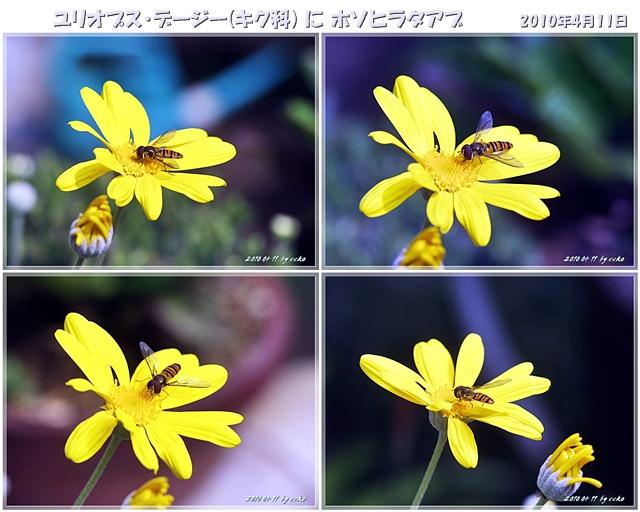 f0104569_0571198.jpg