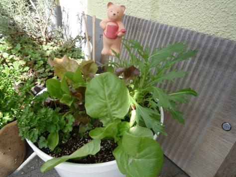 我が家のプチ家庭菜園~♪_e0123286_19105649.jpg