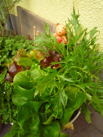 我が家のプチ家庭菜園~♪_e0123286_19121541.jpg