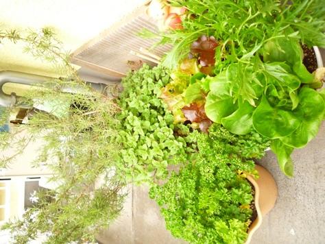 我が家のプチ家庭菜園~♪_e0123286_1913237.jpg