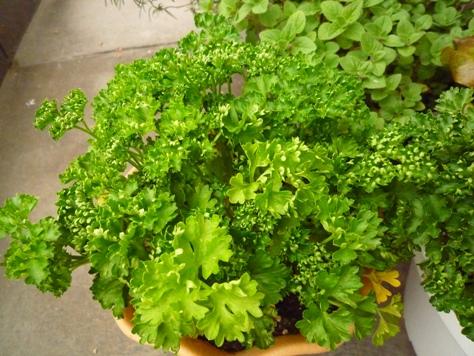 我が家のプチ家庭菜園~♪_e0123286_19165595.jpg