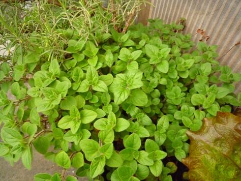 我が家のプチ家庭菜園~♪_e0123286_19172399.jpg