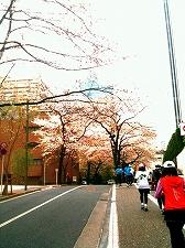 「夢舞いマラソン」試走会_a0036808_14433234.jpg