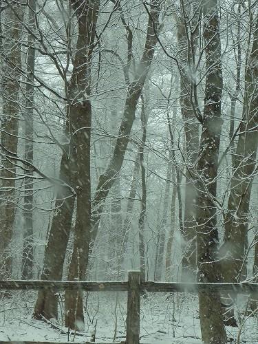 春の嵐、雪!_c0048117_10231228.jpg