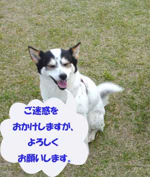 c0113928_8343852.jpg