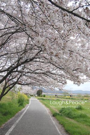土手の桜_e0195830_15103958.jpg