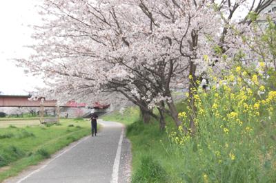 土手の桜_e0195830_15323598.jpg