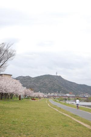 土手の桜_e0195830_15572241.jpg
