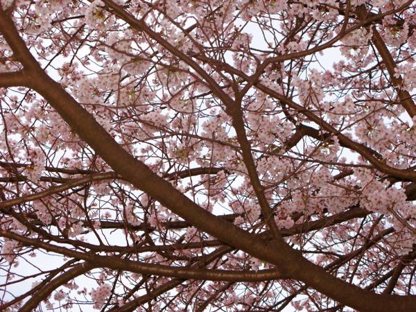 花見2010_c0039145_21495461.jpg