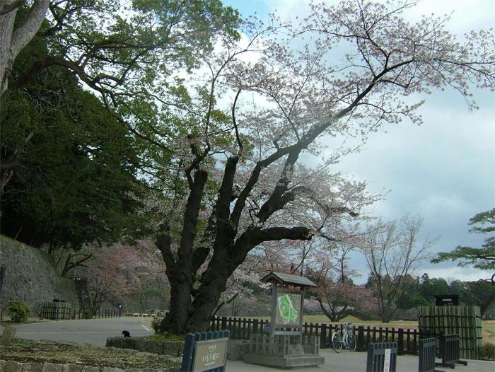 葉桜もまた風情なり_c0110051_20551580.jpg