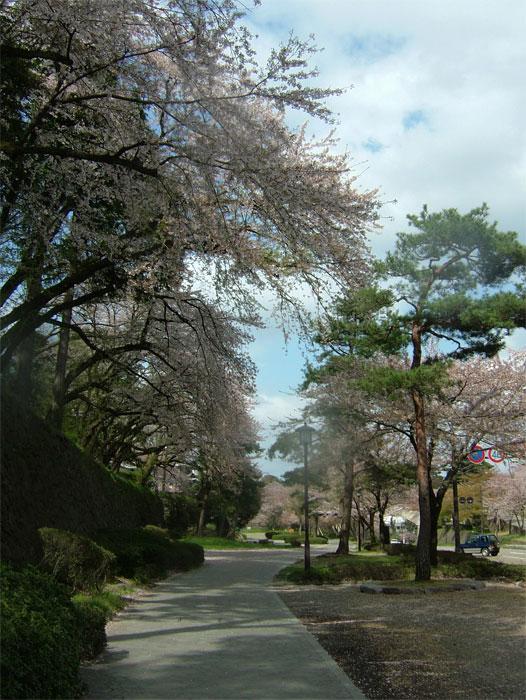 葉桜もまた風情なり_c0110051_20553080.jpg