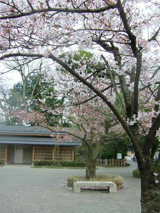 葉桜もまた風情なり_c0110051_20554441.jpg