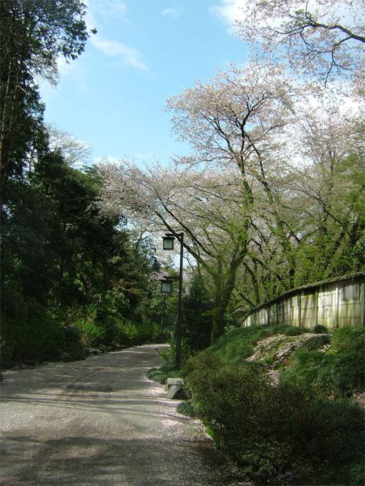 葉桜もまた風情なり_c0110051_20555189.jpg