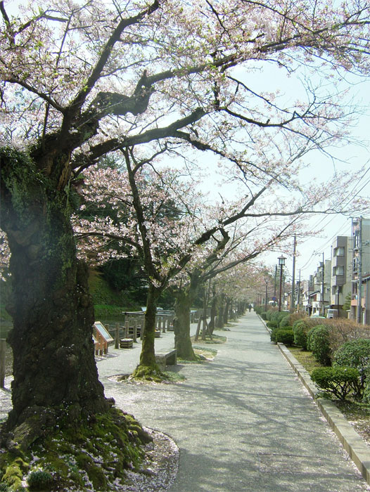 葉桜もまた風情なり_c0110051_205558100.jpg