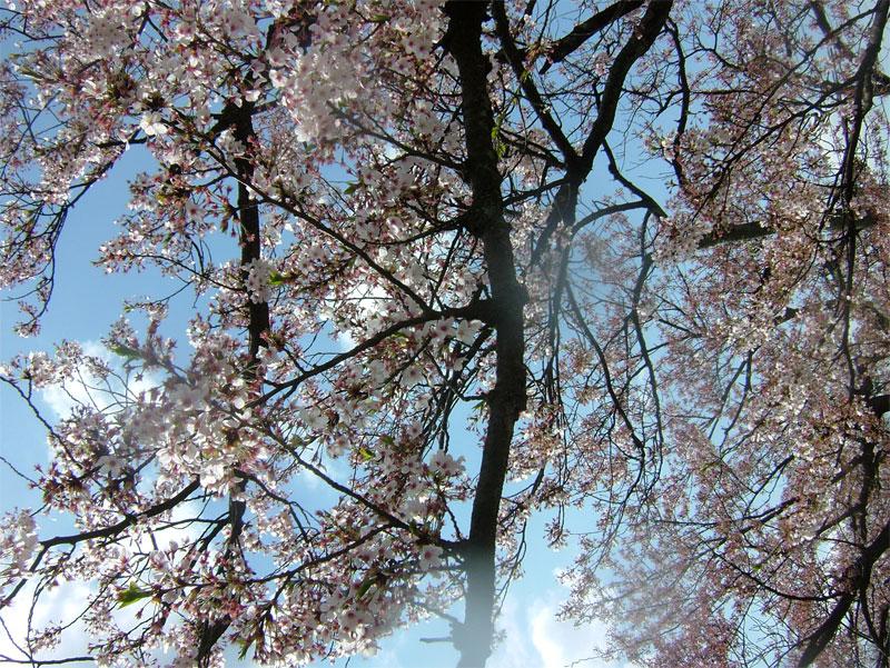 葉桜もまた風情なり_c0110051_2056302.jpg