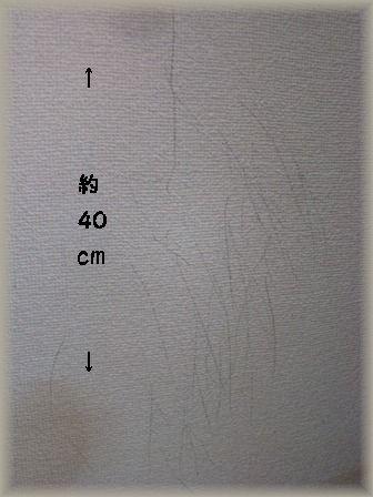 f0185351_1143244.jpg