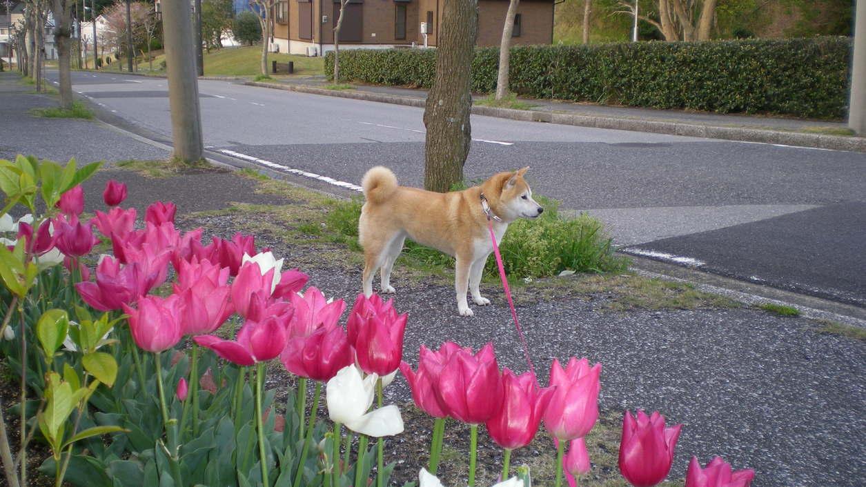 2010年4月14日(水)今日はミュージカル!_f0060461_7182742.jpg