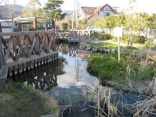 清水公園ビオトープ池_f0205367_16105836.jpg