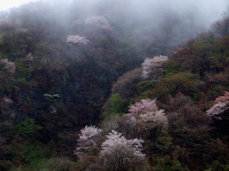 春の物語_b0188175_2163684.jpg