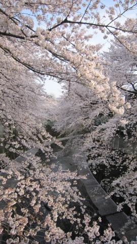石神井川の桜(4/6)_c0052576_20474720.jpg