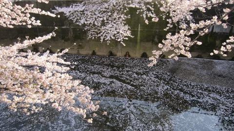 石神井川の桜(4/6)_c0052576_20533772.jpg