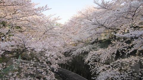 石神井川の桜(4/6)_c0052576_20543535.jpg