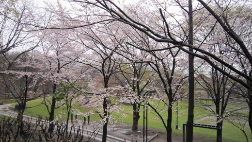 散歩の途中の桜の風景_c0052576_21174798.jpg