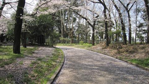 散歩の途中の桜の風景_c0052576_21194039.jpg