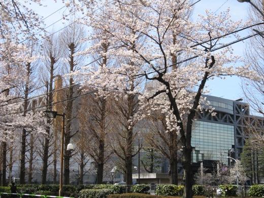 散歩の途中の桜の風景_c0052576_21263930.jpg