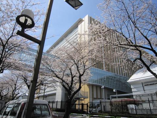 散歩の途中の桜の風景_c0052576_2127017.jpg