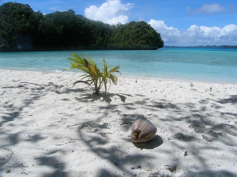 海辺のお写真_e0105376_0295969.jpg
