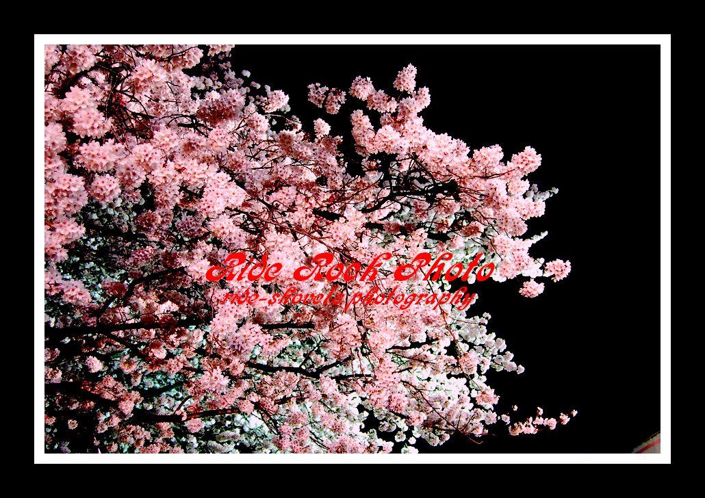 f0170083_19443912.jpg