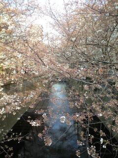 桜目黒川.jpg
