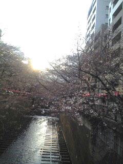 目黒川2.jpg