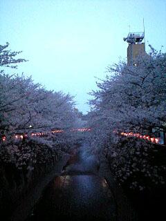 目黒川夜.jpg