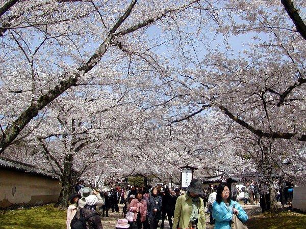桜めぐり その5_c0057390_22312094.jpg