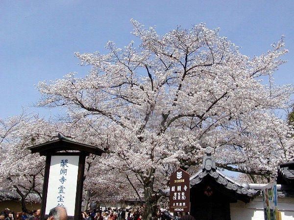 桜めぐり その5_c0057390_22313792.jpg