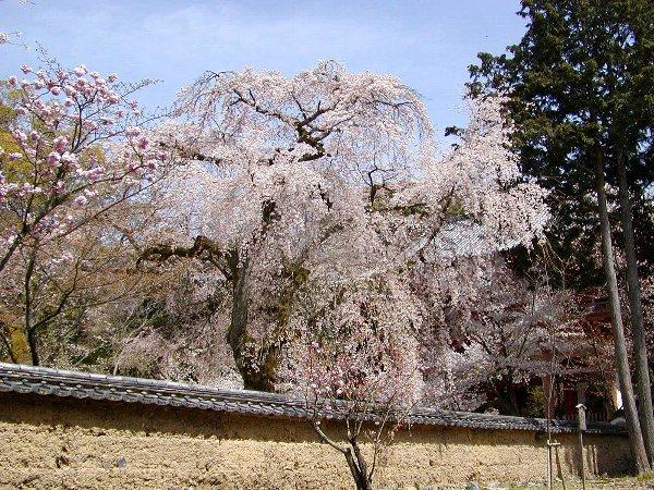 桜めぐり その5_c0057390_223208.jpg