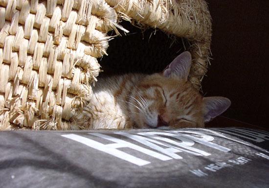 猫ちぐら _a0136293_12472437.jpg