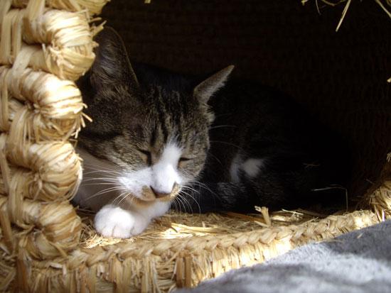猫ちぐら _a0136293_12474536.jpg